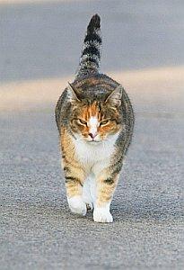 Kater: 97 Prozent der Streunzeit sind Katzen faul (Foto: pixelio.de/Bernd)