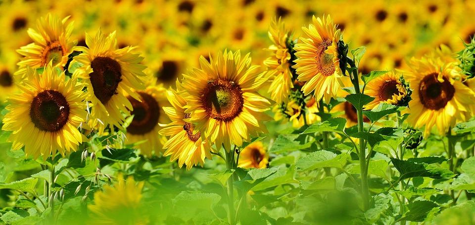 Sommer, Sonne, Sonnenschutz!
