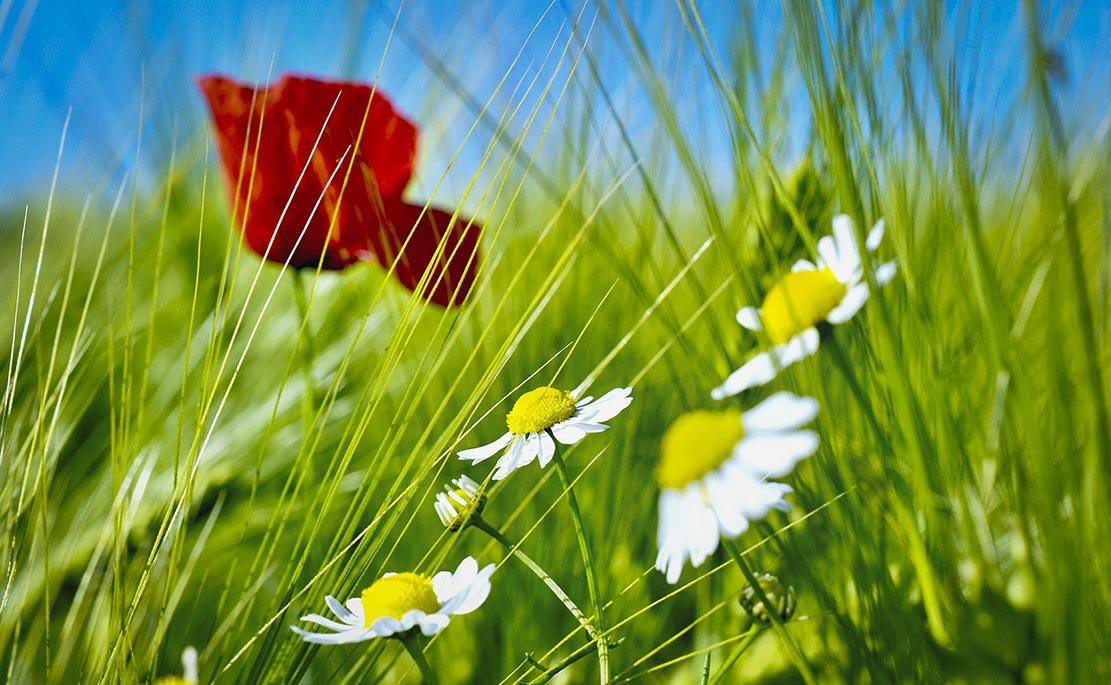 [ Psychologie! } Raus mit Dir! Natur macht glücklich!